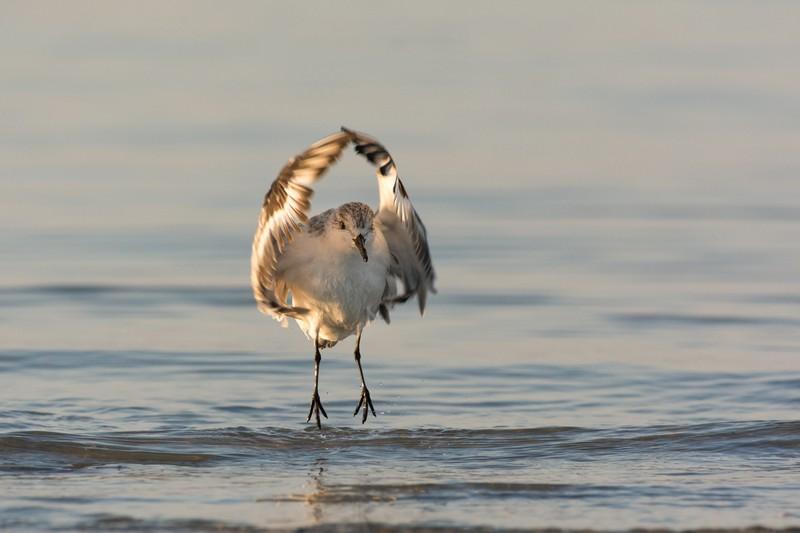 l'oiseau s'élance comme une danseuse étoile