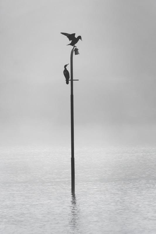 perchoir à cormoran 2019
